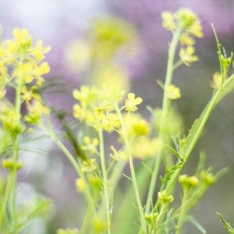 flower-yellow-spring