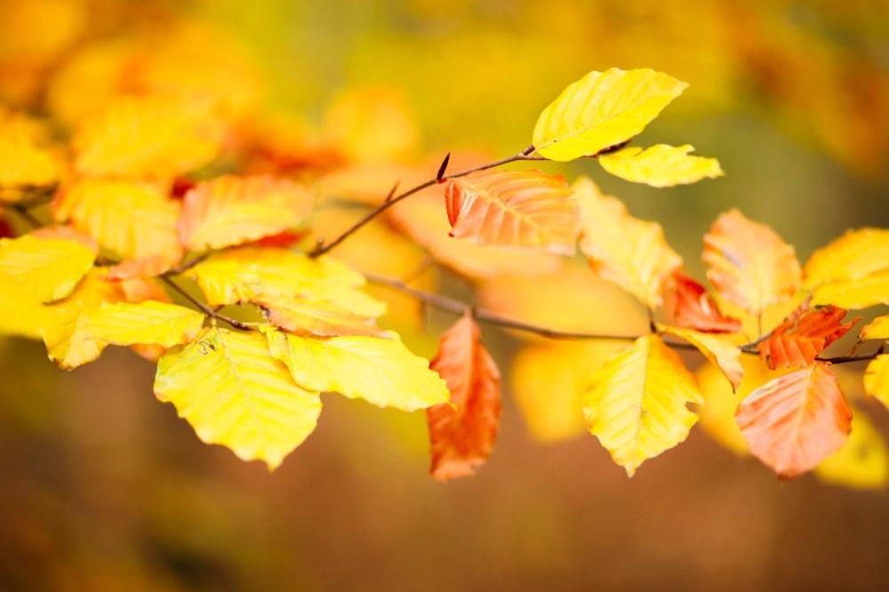 autumn-claudialeclercq-automne2