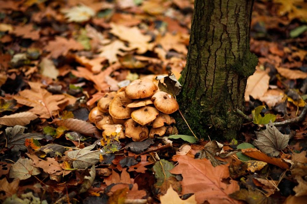 autumn-claudialeclercq-automne5